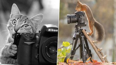 World Photography Day 2020 HD Pictures and Images: Twitter Celebrates the Day with Amazing Quotes, Wishes & Greetings