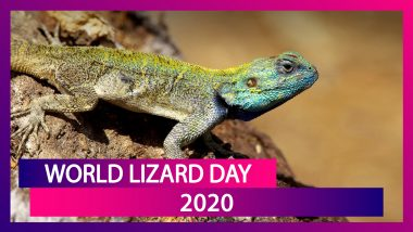World Lizard Day 2020: Interesting Facts About Squamate Reptiles That Will Surprise You