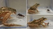 Video of Water Beetles Escaping Alive out of a Frog's Butt After Being Swallowed Is Going Viral! Here's What New Study Has to Say About Evolution in Prey Animals