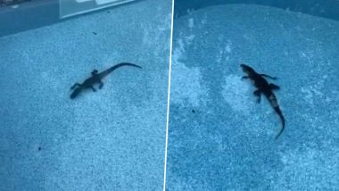 Alabama Man Wakes up to Find an Alligator Chilling in His Pool, Watch Viral Video!