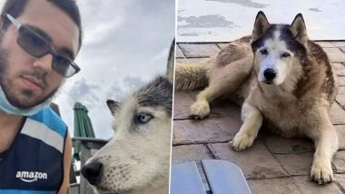 Amazon Delivery Guy Saves Old Husky Dog From Drowning in Pool, Owner Writes a Thankful Note to CEO Jeff Bezos!