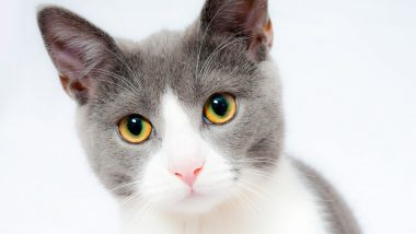 International Cat Day 2020: 12 A-Mew-Sing Facts About The Felines That Every Cat Lover Should Know