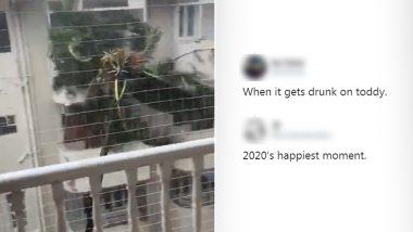 Viral Video of Coconut Tree Dangerously Swaying Due to Strong Winds and Rains in Mumbai Has Netizens Coming Up With Some Funniest Reactions!