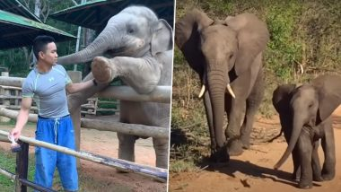 World Elephant Day 2020: From Throwing Tantrums to Playing With Birds, Cute And Funny Videos of Baby Elephants Will Make You Love These Tuskers Even More!