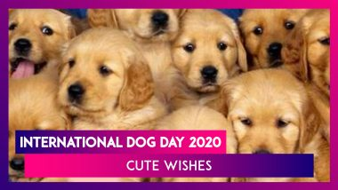 International Dog Day 2020: Cute Quotes And HD Images To Greet Canine Lovers