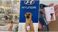 True 'Pawfessional!' Dog Becomes Part of Hyundai Team After Regularly Sitting Outside The Showroom, Netizens Envy Him For Having a Job After Pics Go Viral