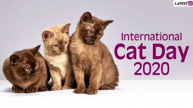 International Cat Day 2020 Date And Significance: Know the History And Activities Related to The Day Celebrating Felines