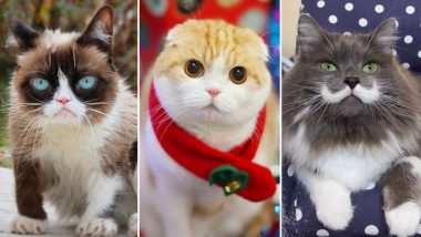 International Cat Day 2020: Grumpy Cat, Waffles, Hamilton - Meet 7 Famous Cats of Instagram (See Pictures)