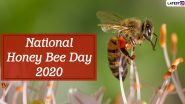 National Honey Bee Day 2020: What is Killing Honey Bee And How Can We Save Them? Simple Yet Genius Ways to Save Honeybee!
