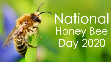National Honey Bee Day 2020 Date And Significance: Know The History And Celebrations of the Day That Creates Awareness on Protecting Bees