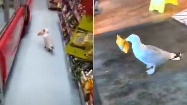 Shoplifter Seagulls! Video of The Seabird Stealing a Packet of Chips Go Viral, 5 Times When Seagulls Thought It Was CUTE To Slyly Fly Away With Eatables From Shops