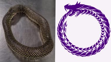 Why Snakes Eat Themselves? Know About This Self-Cannabilising Behavior and Its Meaning and Symbolism of Ouroboros