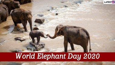 World Elephant Day 2020 Date And Significance: Know The History of the Day That Celebrates the Magnificent Creatures