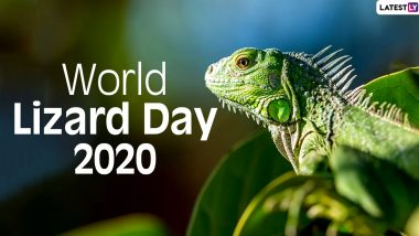 World Lizard Day 2020 Facts: Did You Know Caiman Lizards Have Third Eyelid Acting As Underwater Goggle? Know Interesting Things About These Squamate Reptiles
