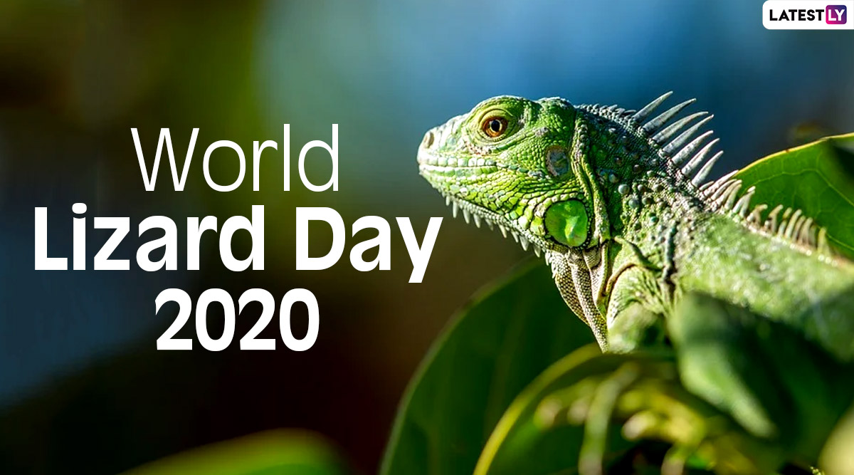 World Day Facts: Did Know  Caiman You 2020 Lizards Lizard