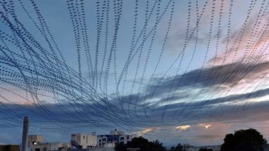 Incredible! Photograph of Parakeets Returning Home at Sunset Looks Like Thousands of Them Flying Together, Check Viral Pic of Bird Trail