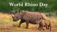 World Rhino Day 2020 Date, History and Significance: Know Everything About the Day Dedicated to Raise Awareness and Protecting the Rhinoceros