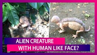 Alien Creature With Human-Like Face Attacking Farmers In Rajasthan? Here's The Truth Behind The Viral Picture