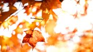 Fall Foliage 2020 in Pics and Videos: Twitterati in Bliss As They Welcome Autumn With Fall Colours in Nature