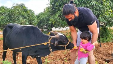 KGF 2 Star Yash Helping His Daughter Ayra Feed a Cow Is the Cutest Pic on the Internet Today