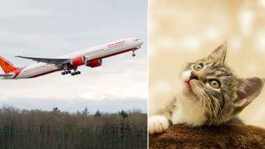 Do Air India Allow Pets? 'Cat Lover' Left Stranded on Airport After Captain Refuses to Allow the Feline, Know the Airlines' Rules