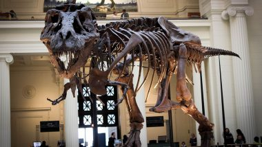 T-Rex Skeleton Named Stan Likely to Fetch Record Price of Around $8 Million at Auction in New York