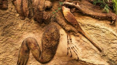 Forget 'Cloned' Dinosaur in China, Find Real Dinosaur Fossils At These 5 Places Around The World