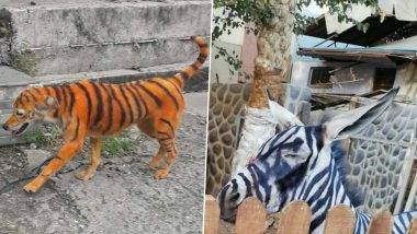 Stray Dog Painted To Look Like Tiger in Malaysia Sparks Outrage, 3 Similar Incidents Where Dogs & Donkeys Were Passed Off as Those From The Wild (Pictures And Videos)