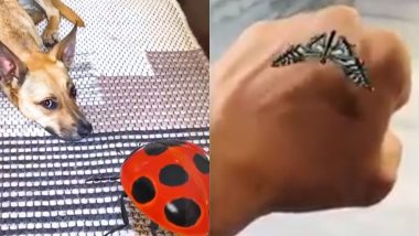 Google 3D Insects: View AR Insects Beetle, Butterfly & Ladybug in 3D, 'Creepy Crawlies' to Come to Life on Your Screen!