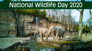 National Wildlife Day 2020 Date And Significance: Know All About the Obsrrvance That Creates Awareness About Endangered Spcies And Their Conservation