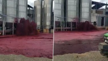 Spain: 50,000 Litres of Red Wine Goes to Waste After Defective Tank Ruptures at Bodegas Vitivinos Winery and Netizens Cannot Stop Crying Over Spilt Wine! (Watch Viral Video)