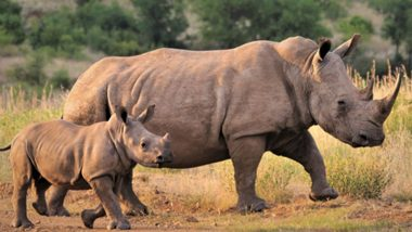 Rhino Poaching in Assam Reduced by 86% in Past 3 Years, Says Environment and Forest Minister Parimal Suklabaidya