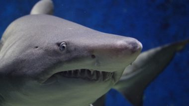 Sharks Nearly Disappeared From Earth's Oceans 19 Million Years Ago: Study