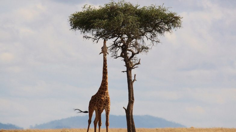 National Wildlife Day 2020: Incredible Pics of Animals in Their Wild Habitat