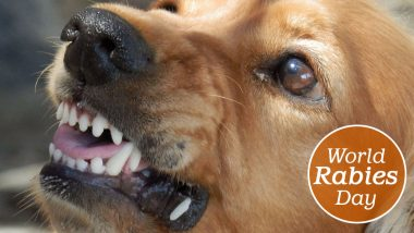 World Rabies Day 2020 Myths and Facts: From Transmission to Vaccination, Misconception That MUST Be Put an End To