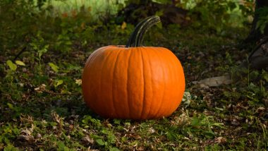 National Pumpkin Day 2020 Facts: Did You Know Pumpkin Is Not the First Jack-o'-Lantern? 7 Interesting Things About the Winter Squash You May Not Have Known!