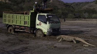 Photo of Komodo Dragon From Indonesia's 'Jurassic Park' Project Sparks Fear Among Environmentalists Over Potential Threat to Its Natural Habitat