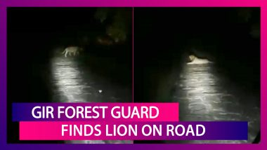 Midnight Encounter With A Lion: Gir Forest Guard Faces Down King Of The Jungle In Viral Video From Gir Lion Sanctuary In Gujarat