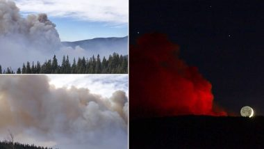 Luna Fire in Pics and Videos: Hot, Dry & Breezy Conditions Challenge Fire Containment Efforts in New Mexico, Wildfire Season in US Continues to Create Disastrous Situation