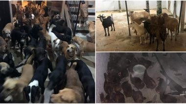 Hurricane Delta: Mexican Man Brings Over 300 Street Dogs Home Along With Sheep, Goats and Hens to Shelter Them From Storm, Wins Hearts! Check Pics and Videos