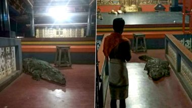 'Holy' Crocodile Babiya Enters Kerala's Ananthapura Lake Temple in Kasaragod And Leaves on Priest's Request; Know All About The 'Vegetarian' Reptile (See Pictures)