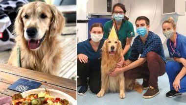 Golden Retriever With Brain Tumour Undergoes Radiotherapy Successfully in the UK With Treatment Given Human Cancer Patients, Vets Throw Him Party! (See Pictures)