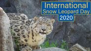 International Snow Leopard Day 2020: Did You Know These Large Cats Are Known as 'Ghosts of the Mountain'? Know Interesting Facts About the Endangered Animal