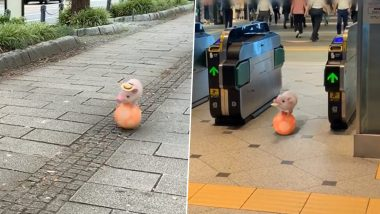 Micro Pig Pinky Who Went Viral For Balancing on a Ball at Tokyo Station is Not Real But a Virtual Pet! Check Her Other Similar CGI Videos of The Cute Real-Looking Animal