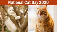 National Cat Day 2020 Cute Photos And Wallpapers: Adorable Pictures & Funny Cat GIFs of Felines to Share on The Observance