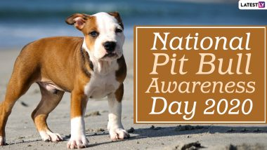 National Pit Bull Awareness Day 2020 Date And Significance: Know The History of the Observance That Highlights Stereotypes About the Breed And Celebrates the Dog