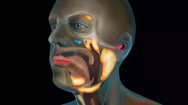 Tubarial Salivary Glands Discovery: New Organ in the Human Throat Discovered! Dutch Scientists Studying Prostate Cancer Stumble Upon New Sets of Salivary Glands
