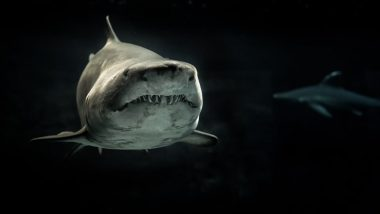 First Ever Albino All-White Shark Caught off Britain, See Pictures and Video