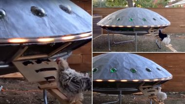 Video of UFO Shaped Chicken Coop is Going Viral Again! From 'Eggsraterestials' to 'Close Hencounters' Netizens Come Up With The Best Punny Reactions