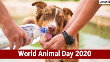 World Animal Day 2020: From Volunteering to Adopting, 5 Doable Ways to You Can Improve Animals' Lives and Make Earth a Better Place for Them!